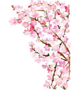 flores transfer